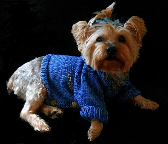Douglas Dog Knitting Pattern : 17 Best images about Crochet and knitted puppy clothes on Pinterest Dog coa...