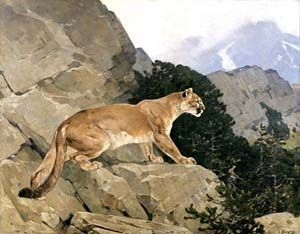 avid sportsman and artist, Carl Rungius was the first wildlife artist in America  #art