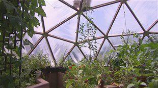 Faire pousser ses #légumes à l'année, presque sans électricité!