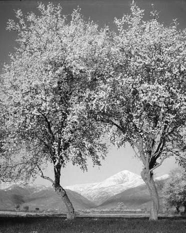 Κίσσαβος 1955 φωτ.Τάκης Τλούπας