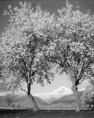Takis Tloupas,Mount Ossa(Kissavos),Thessaly,Greece,1955-Κίσσαβος 1955 φωτ.Τάκης Τλούπας
