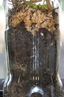 Instructions for a wormery & a compost pile in 2 Liter bottles