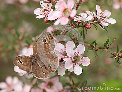 pretty native australian flowers - Google Search