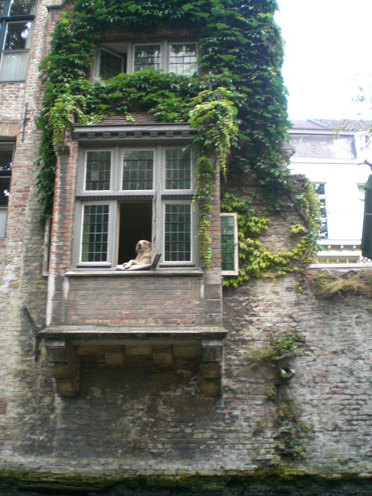 Bir Brugge sakini