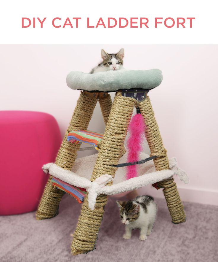 Create a purr-fect perch for your feline friend!