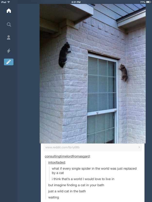 This implies that every single spider in the world will be replaced by a grand total of one (1) cat. Just a single cat. Doing all that work. How dare you condemn her to a life of misery, tumblr user intoxifaded.