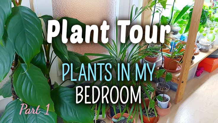 Plant Tour PART 1 - Plants in my Bedroom