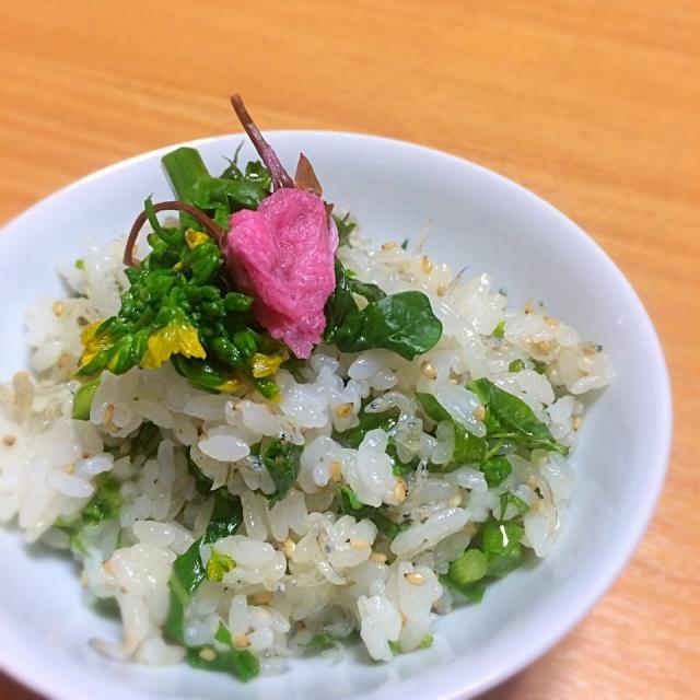 菜の花は体を春モードに切り替えてくれる食材です この時期たくさん食べましょう(*^_^*) - 16件のもぐもぐ - 菜の花と桜のごはん by tomo3271