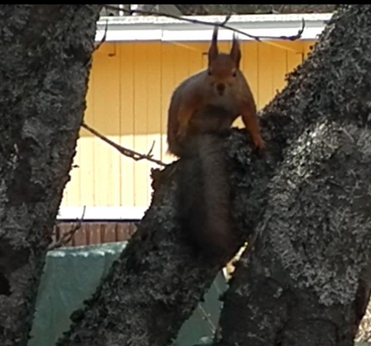 Orava. Kuva 2. 13.04.2015.