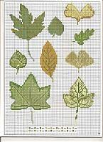 foglie verdi miste (1)