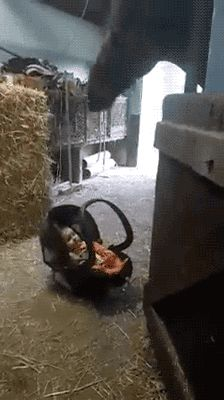 "tastefullyoffensive: "" gifsboom: "" Video: Horse Babysits Baby "" A real rocking horse. """