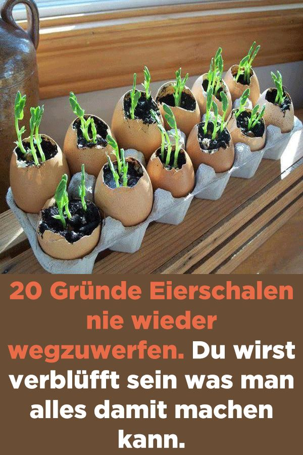 20 Gründe Eierschalen nie wieder wegzuwerfen. Du wirst verblüfft sein was man …