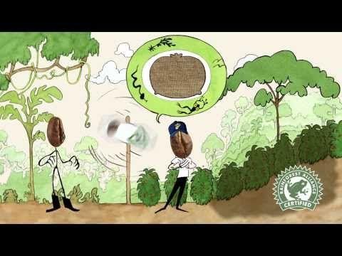 Kennt ihr eigentlich unsere #Kaffee-Siegel: BIO, Rainforest Alliance, UTZ Certified und #Fairtrade? Hier erklärt Herr Bohne sie in seinem neuen Film.