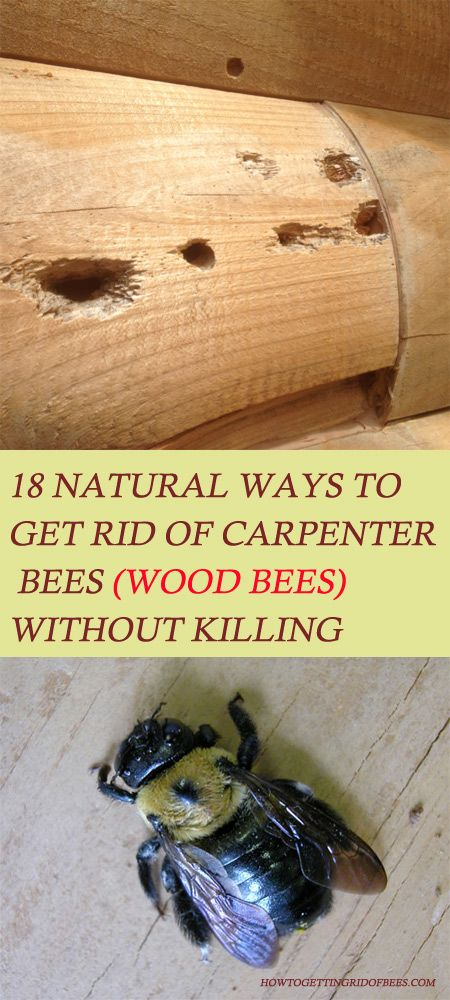 18 Ways to Get Rid of Carpenter Bees (Wood Bees) Without