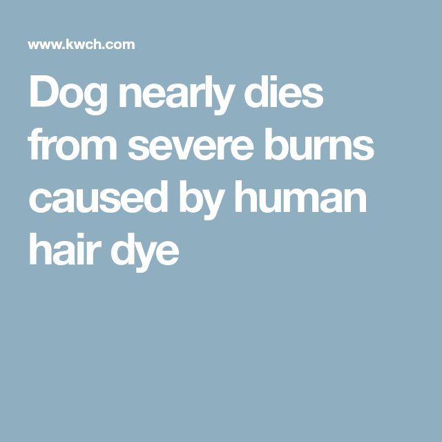 Dog nearly dies from severe burns caused by human hair dye