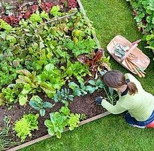 How to start a veggie garden.... hopefully going to need this in a month...
