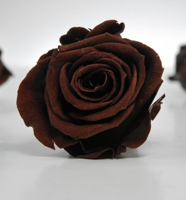"""This color is gorgeous! Preserved Roses 2-1/2"""" Brown Natural Roses (12 rose heads) 12 for $35"""