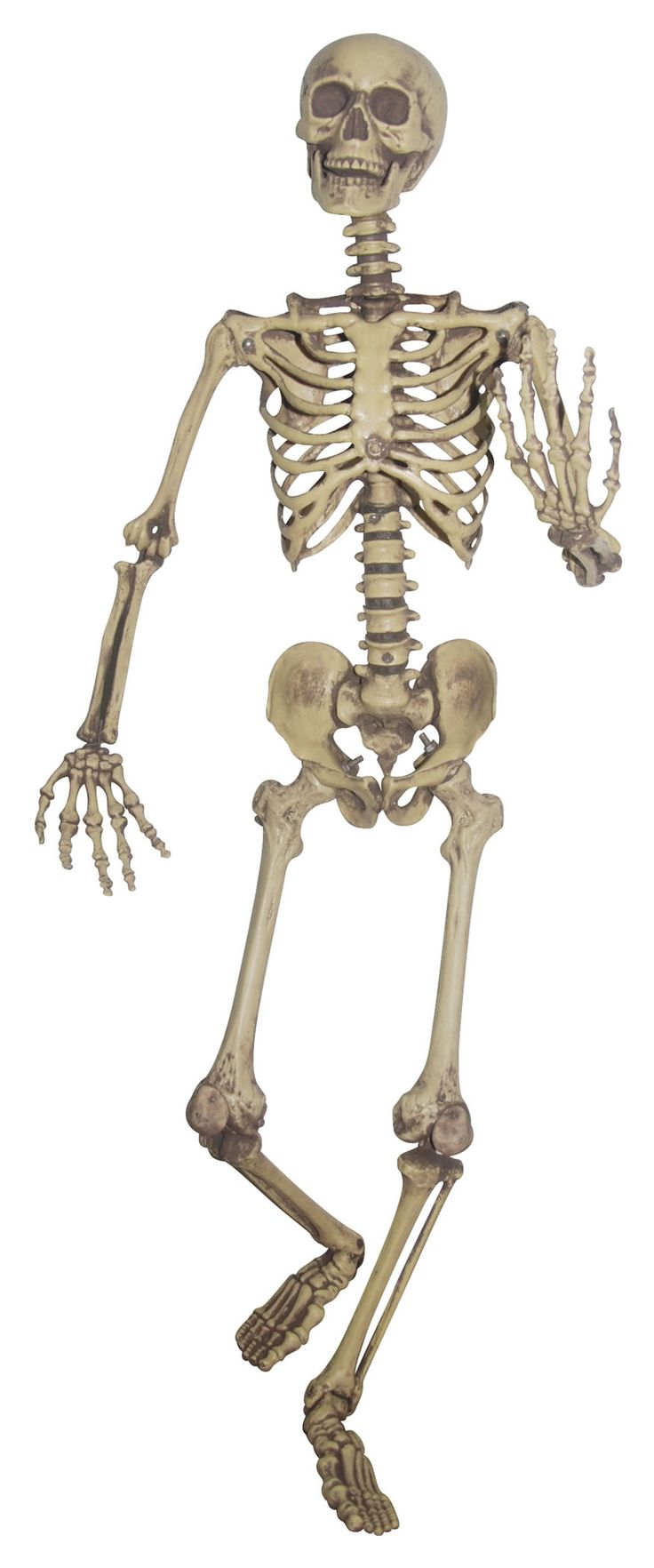Got this Real Cheap at This Cool Site DasCheap.com! Take a look real quick please Buy Cheap Lifesize Posable Skeleton - Realistic Skeleton Prop