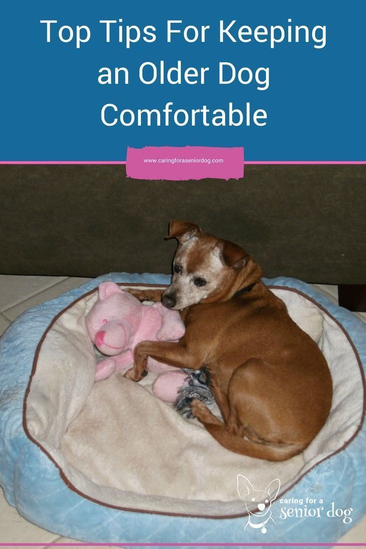 How I Kept My Old Dog Red Happy And Comfortable Old Dogs Dogs