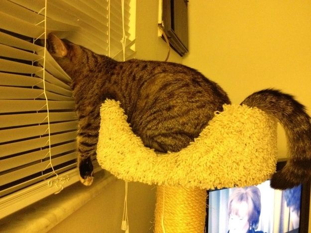 28 Cats Who Have No Idea How They Ended Up Here