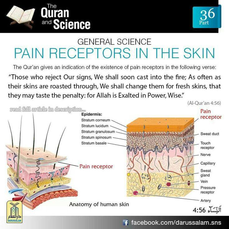 Pain Receptors in the Skin
