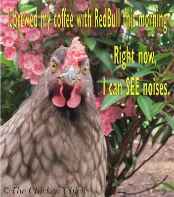I brewed my coffee with RedBull this morning. Right now, I can see noises. ~The Chicken Chick