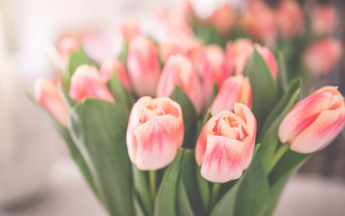 Download wallpapers pink tulips, spring bouquet, beautiful flowers, tulips