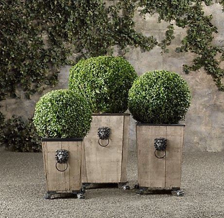 BALL LIVE BOXWOOD TOPIARY  $99 - $189  Boxwood's dense evergreen leaves – symbols of strength and permanence – have made the plant a favorite for shaping into topiaries since ancient times. These stately, low-maintenance specimens arrive fresh from Oregon's Willamette Valley and will thrive outdoors in Zones 5-8.