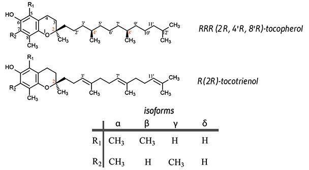 Vitamin E isomers