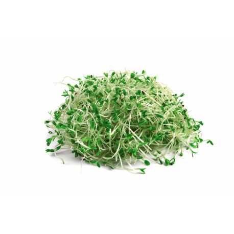 Ο απόλυτος χυμός υγείας! - Αγνός και ζωντανός χυμός από φύτρα μπρόκολου - Pure raw fresh broccoli sprouts juice