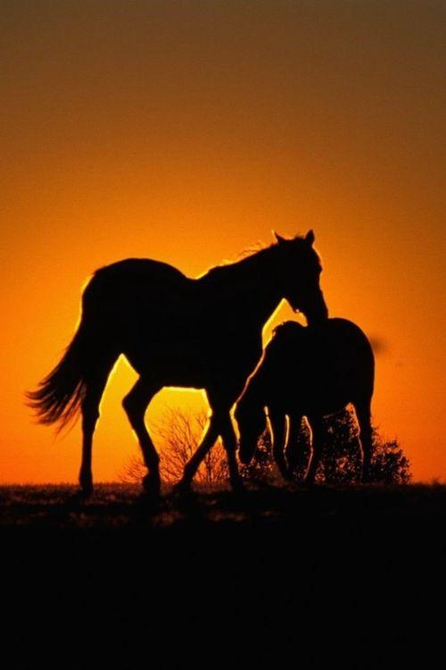 cheval avec coucher de soleil