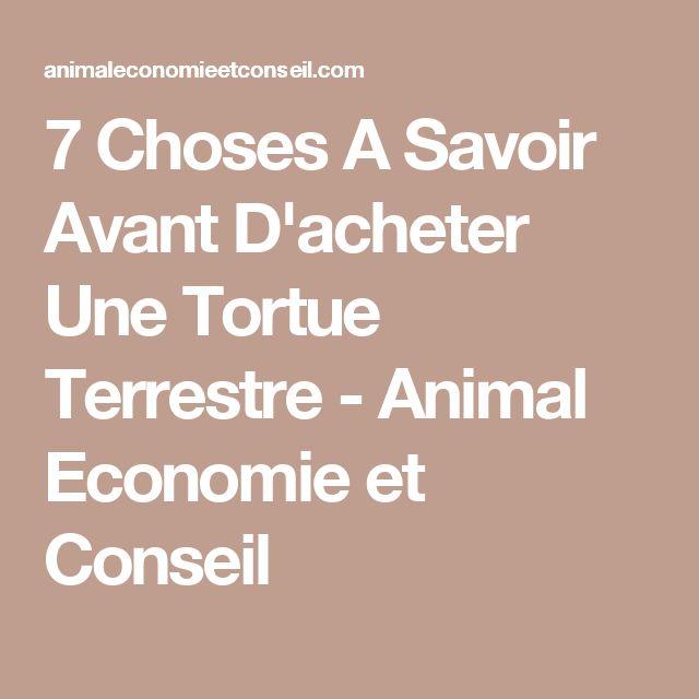 7 Choses A Savoir Avant D'acheter Une Tortue Terrestre - Animal Economie et Conseil