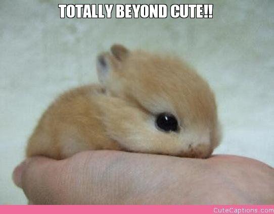 Totally Beyond Cute!!