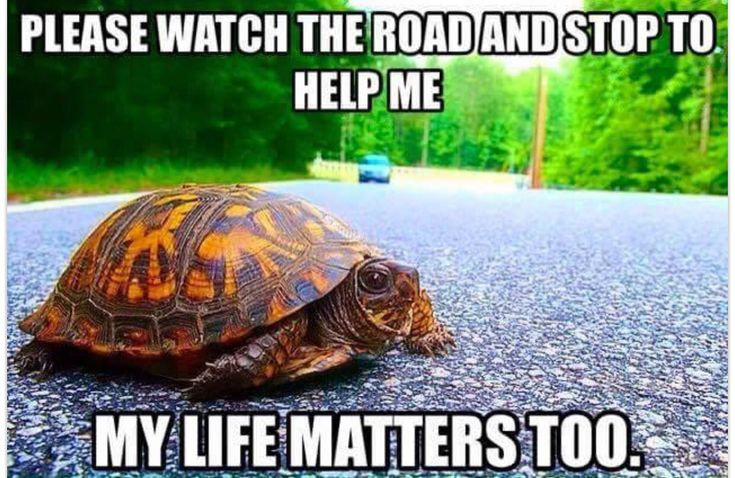 Turtles are *somewhat* slower than many other animals. Especially when going over roads, which is very dangerous.