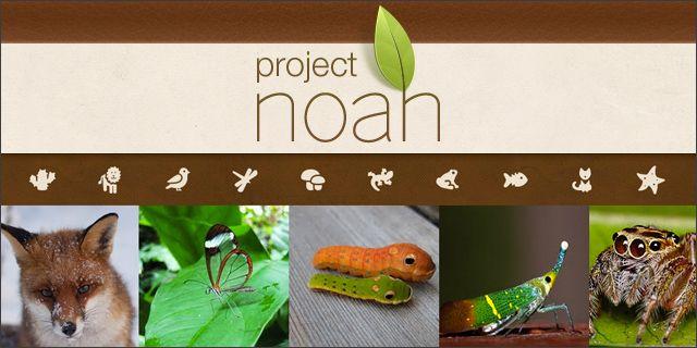 Project Noah tarjoaa hyvin toimivan nettipohjaisen luontopäiväkirjasovelluksen. Oppilaat voivat kuvatapuhelimella tai tabletilla kasveja, eläimiä, puita yms. ja ladata sitten kuvat helposti ja vai…