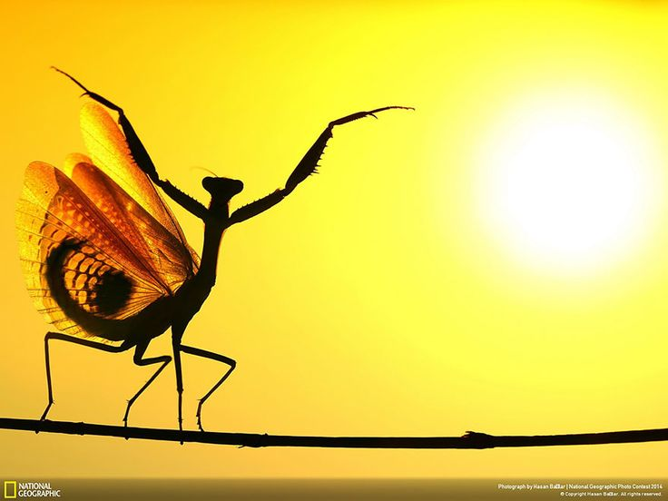 6) 20 Amazing Nature Photos from the 2014 National Geographic Photo Contest.