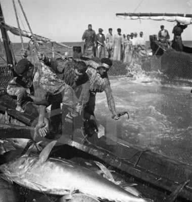 Ai mê rico Algarve!: Pesca de atum
