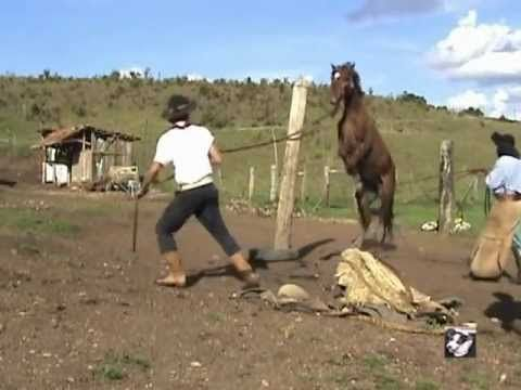 ▶ Petra : the strongest Belgian Draft Horse - YouTube