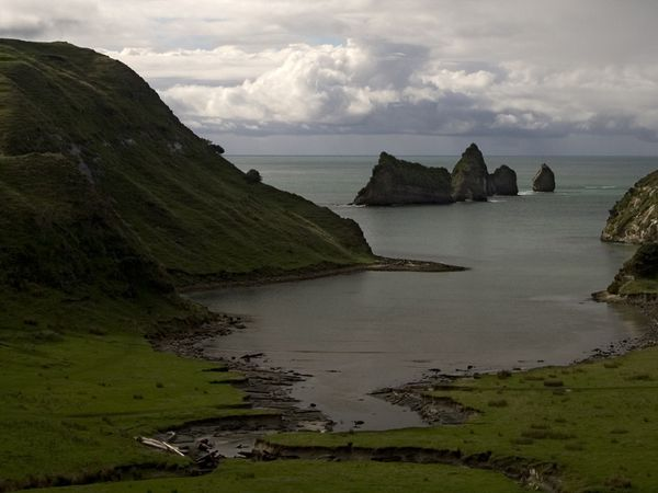 """New Zealand, North Island.  Is not as """"extreme"""" but is awesome! It is also a horticulturist's dream."""