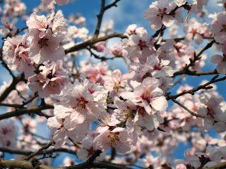 A TAVASZ: Tavaszi képek, videók