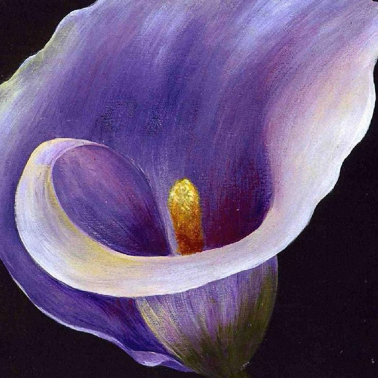 painted pictures of purple cala lilies | Calla Lily Painting by Tracey Harrington-Simpson - Lavender Calla Lily ...