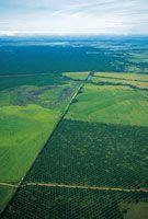Cultivo industrial de palma africana en las sabanas del piedemonte llanero