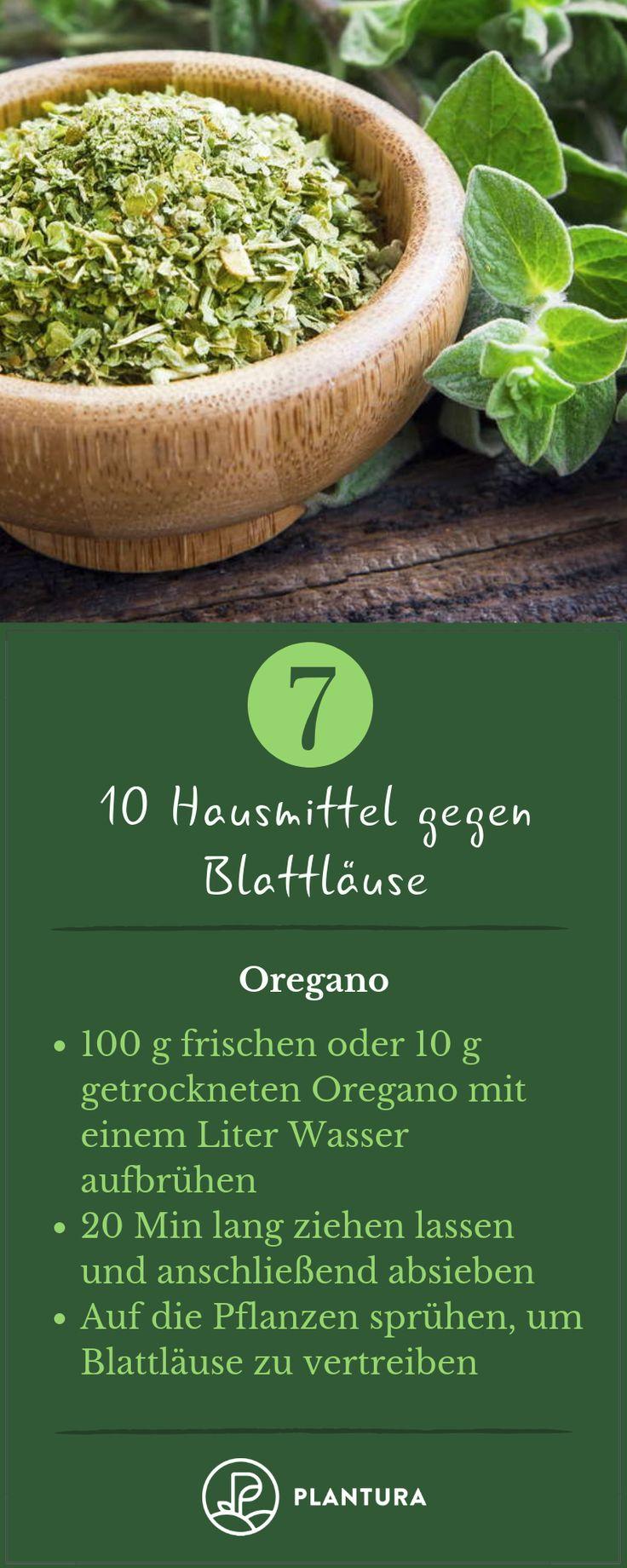 10 Hausmittel gegen Blattläuse