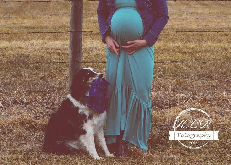 Facebook.com/klrfotography, maternity photo, photography, poses with animals, dog, country style ❤️