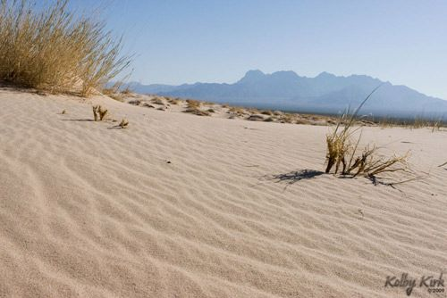 Mojave Desert...hottest desert in USA