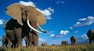 Afbeeldingsresultaat voor mooie olifant