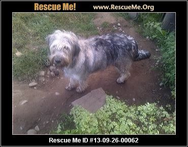 — Pennsylvania Irish Wolfhound Rescue — ADOPTIONS — RescueMe.Org