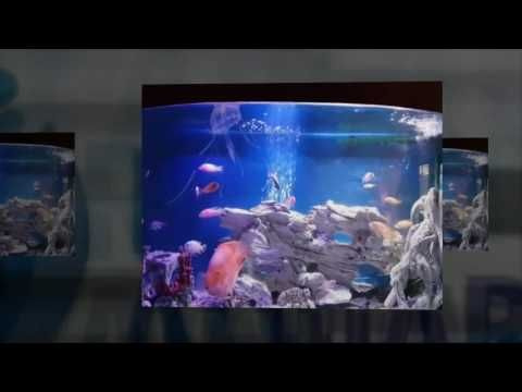 Aquarium in any hotel, restaurant etc. looks fantastic and very serene. Check out our Fish tank room display. https://www.youtube.com/watch?v=o4m9NzdbMUE  #RentAquarium, #RentanAquarium, #AquariumLondon, #LondonAquarium, #London
