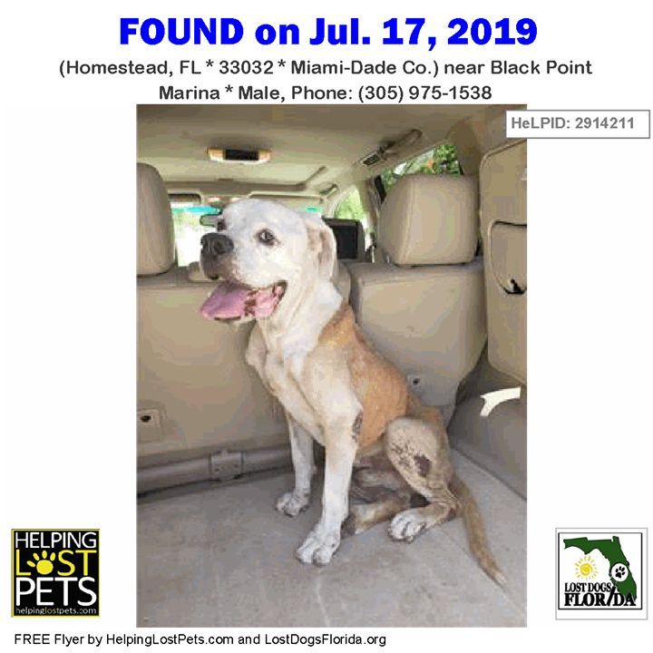 Found Dog Is This Your Lost Dog Or Do You Recognize Him Do You
