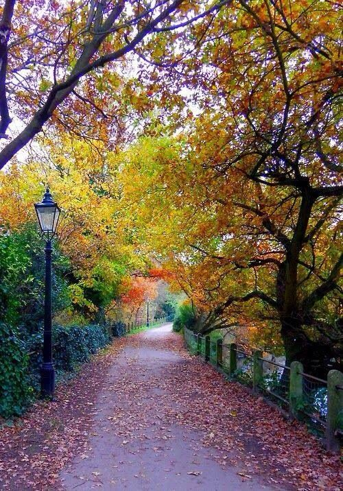 Hamstead Heath, London.
